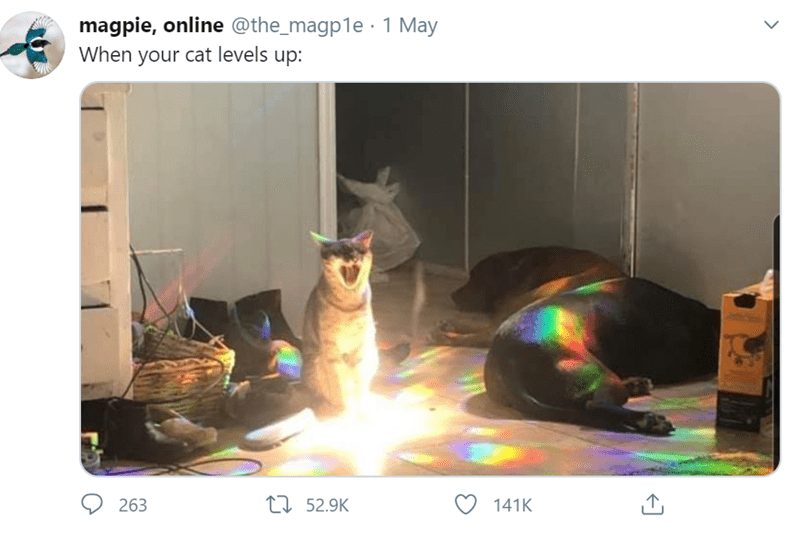 Technology - magpie, online @the_magp1e · 1 May When your cat levels up: 263 27 52.9K 141K