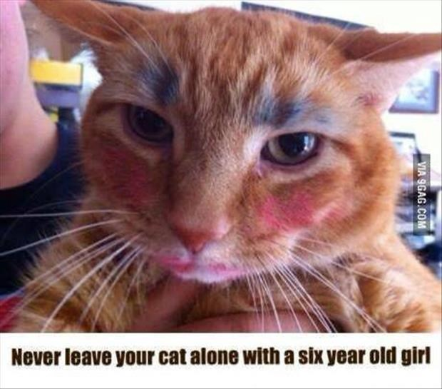Cat - Never leave your cat alone with a Six year old girl VIA 9GAG.COM