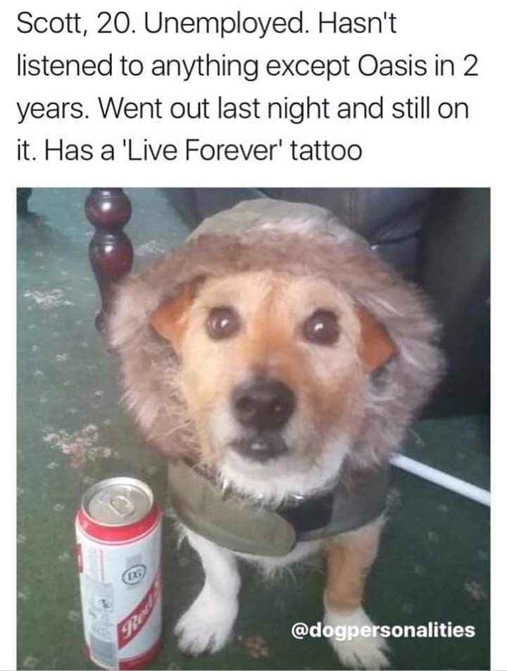 Dog - Scott, 20. Unemployed. Hasn't listened to anything except Oasis in 2 years. Went out last night and still on it. Has a 'Live Forever' tattoo @dogpersonalities