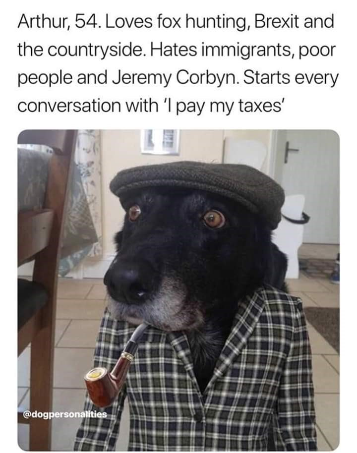 Dog - Arthur, 54. Loves fox hunting, Brexit and the countryside. Hates immigrants, poor people and Jeremy Corbyn. Starts every conversation with 'I pay my taxes' @dogpersonalities