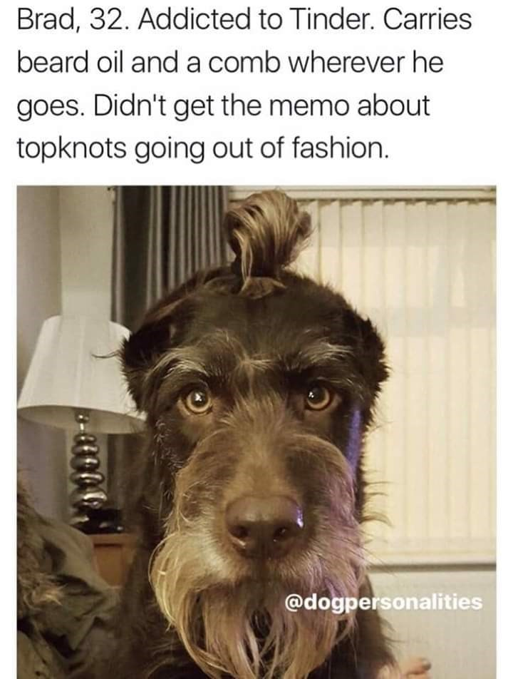 Dog - Brad, 32. Addicted to Tinder. Carries beard oil and a comb wherever he goes. Didn't get the memo about topknots going out of fashion. @dogpersonalities