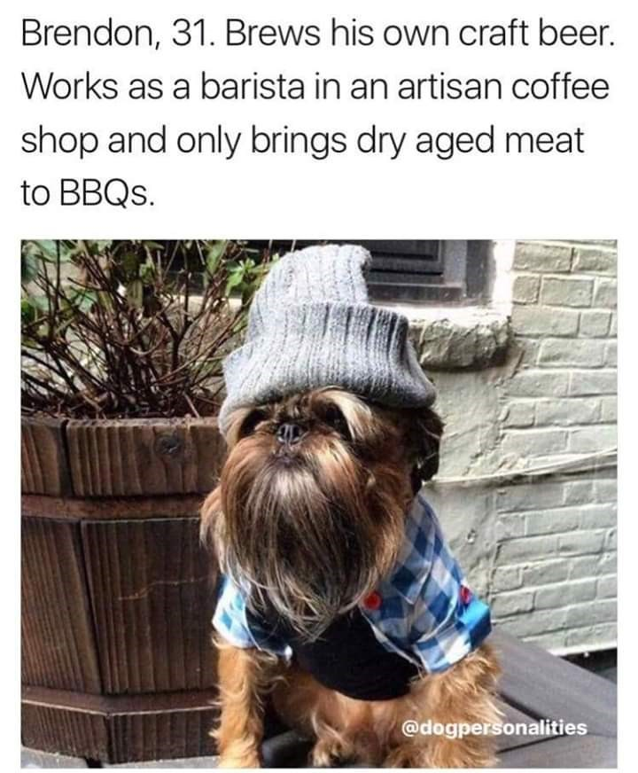 Human - Brendon, 31. Brews his own craft beer. Works as a barista in an artisan coffee shop and only brings dry aged meat to BBQS. @dogpersonalities