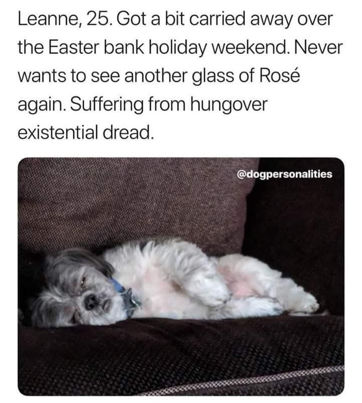 Text - Leanne, 25. Got a bit carried away over the Easter bank holiday weekend. Never wants to see another glass of Rosé again. Suffering from hungover existential dread. @dogpersonalities