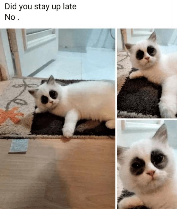 cat memes - 9482917632