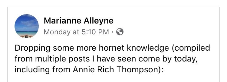 Text - Marianne Alleyne Monday at 5:10 PM • Dropping some more hornet knowledge (compiled from multiple posts I have seen come by today, including from Annie Rich Thompson):
