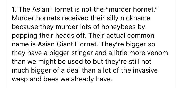 "Text - 1. The Asian Hornet is not the ""murder hornet."" Murder hornets received their silly nickname because they murder lots of honeybees by popping their heads off. Their actual common name is Asian Giant Hornet. They're bigger so they have a bigger stinger and a little more venom than we might be used to but they're still not much bigger of a deal than a lot of the invasive wasp and bees we already have."