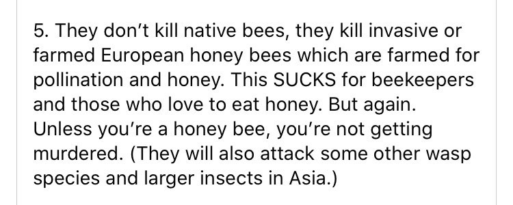 Text - 5. They don't kill native bees, they kill invasive or farmed European honey bees which are farmed for pollination and honey. This SUCKS for beekeepers and those who love to eat honey. But again. Unless you're a honey bee, you're not getting murdered. (They will also attack some other wasp species and larger insects in Asia.)