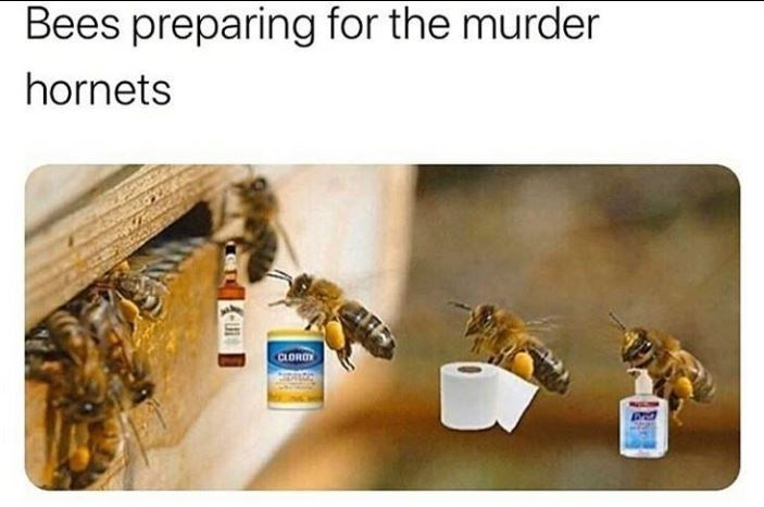 Bee - Bees preparing for the murder hornets CLORO