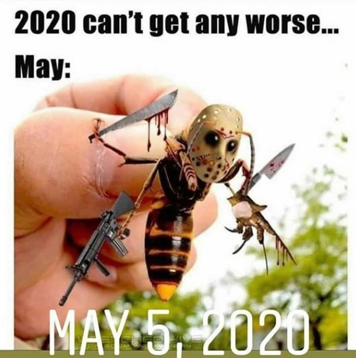 Insect - 2020 can't get any worse... May: MAY 5, 2020