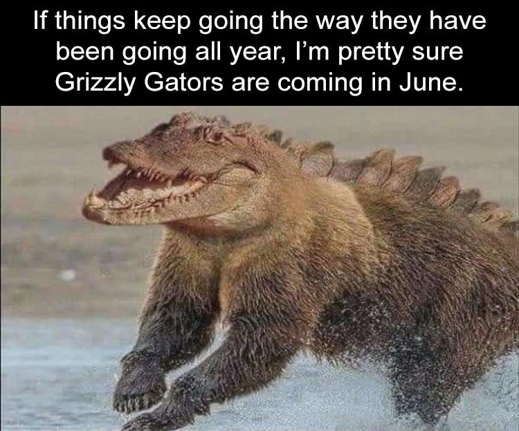 If things keep going the way they have been going all year, I'm pretty sure Grizzly Gators are coming in June. photoshop edit mash up grizzly bear alligator