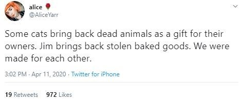 Text - alice @AliceYarr Some cats bring back dead animals as a gift for their owners. Jim brings back stolen baked goods. We were made for each other. 3:02 PM · Apr 11, 2020 - Twitter for iPhone 19 Retweets 972 Likes
