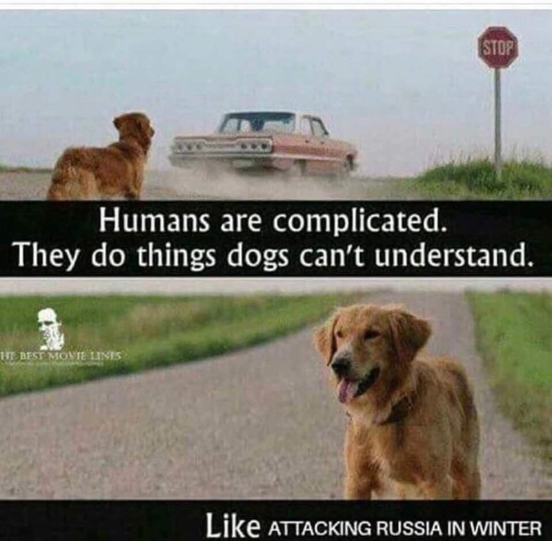 Dog - STOP Humans are complicated. They do things dogs can't understand. HE BEST MOIE LINES Like ATTACKING RUSSIA IN WINTER