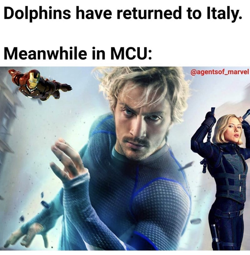 Movie - Dolphins have returned to Italy. Meanwhile in MCU: @agentsof_marvel