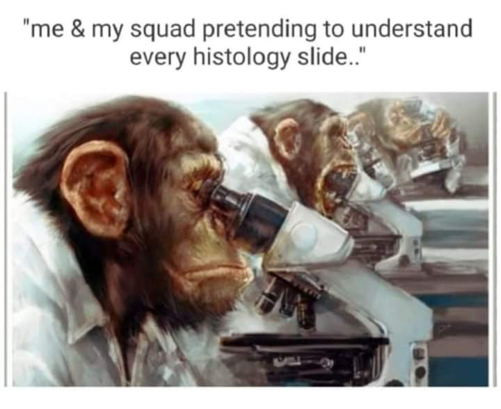 """Text - """"me & my squad pretending to understand every histology slide."""""""