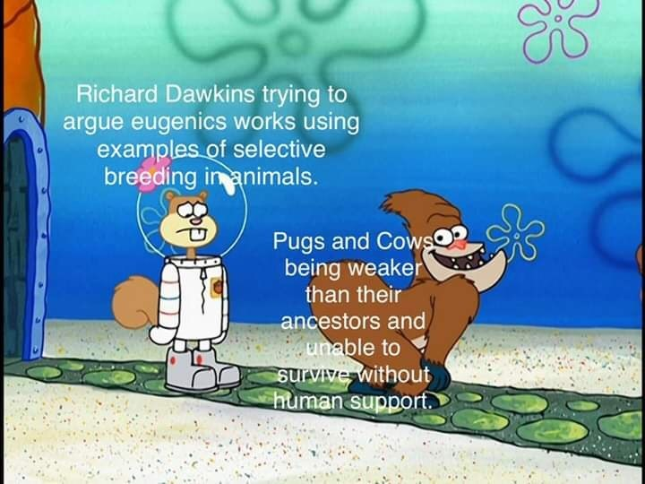 Cartoon - Richard Dawkins trying to argue eugenics works using examples of selective breeding inanimals. ఆడ Pugs and Cows being weaker than their ancestors and unable to survive without human support.