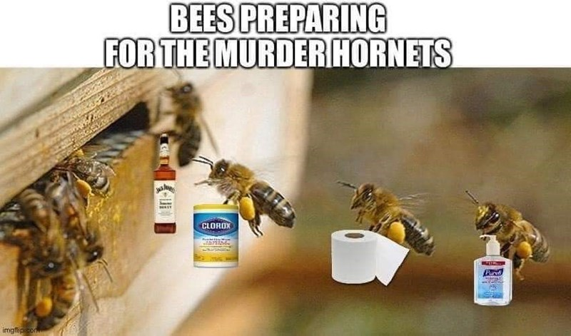 Bee - BEES PREPARING FOR THE MURDER HORNETS CLOROX Pur imgfipeco