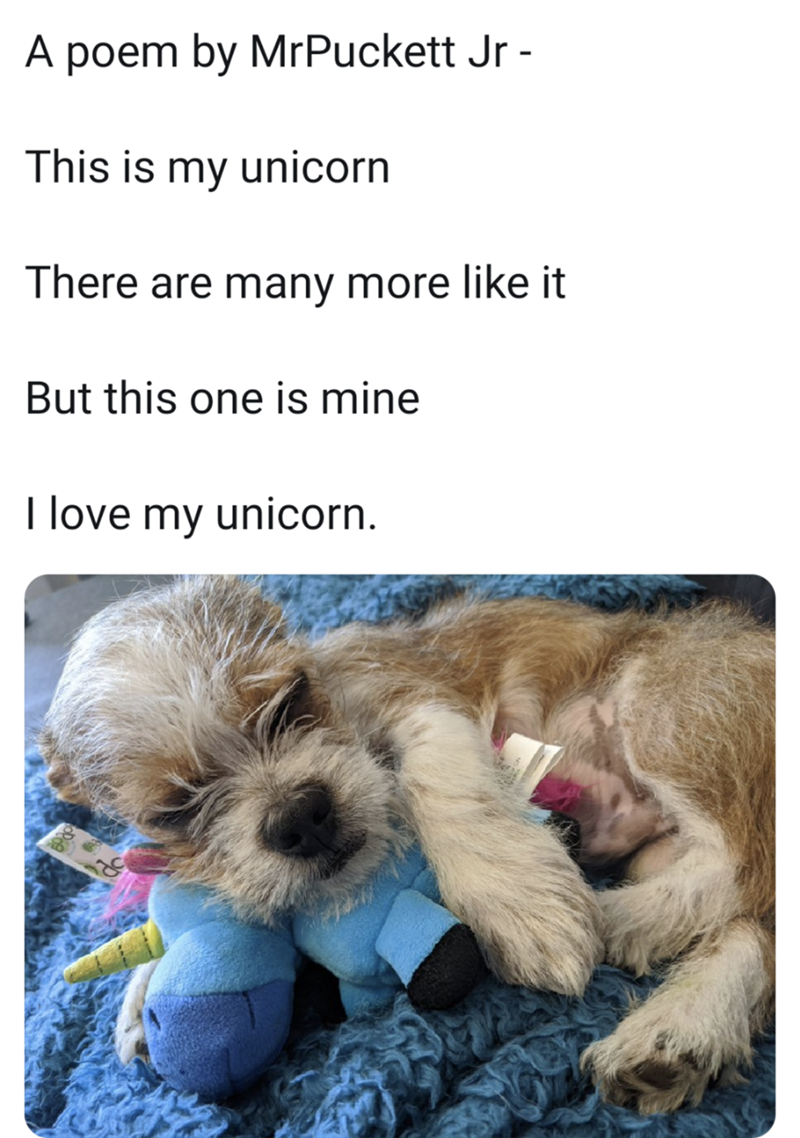 Dog - A poem by MrPuckett Jr - This is my unicorn There are many more like it But this one is mine I love my unicorn.