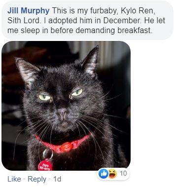 Cat - Jill Murphy This is my furbaby, Kylo Ren, Sith Lord. I adopted him in December. He let me sleep in before demanding breakfast. 10 Like Reply 1d