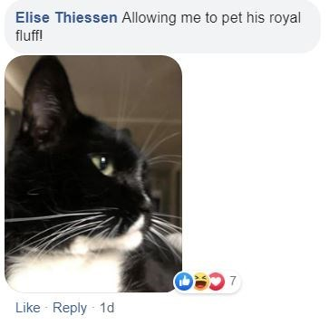 Cat - Elise Thiessen Allowing me to pet his royal fluff! Like Reply 1d