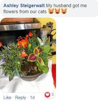 Flower - Ashley Steigerwalt My husband got me flowers from our cats Like Reply 1d