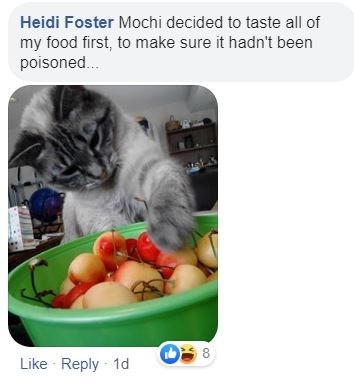 Cat - Heidi Foster Mochi decided to taste all of my food first, to make sure it hadn't been poisoned. Like Reply 1d