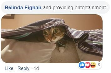 Cat - Belinda Eighan and providing entertainment Like Reply - 1d