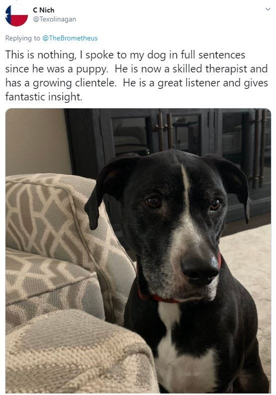 Dog - C Nich @Texolinagan Replying to @TheBrometheus This is nothing, I spoke to my dog in full sentences since he was a puppy. He is now a skilled therapist and has a growing clientele. He is a great listener and gives fantastic insight.