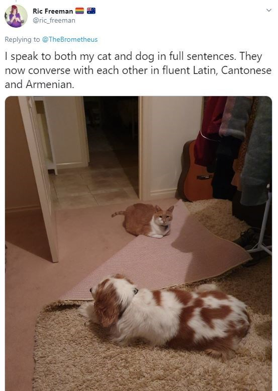 Dog - Ric Freeman @ric_freeman Replying to @TheBrometheus I speak to both my cat and dog in full sentences. They now converse with each other in fluent Latin, Cantonese and Armenian.