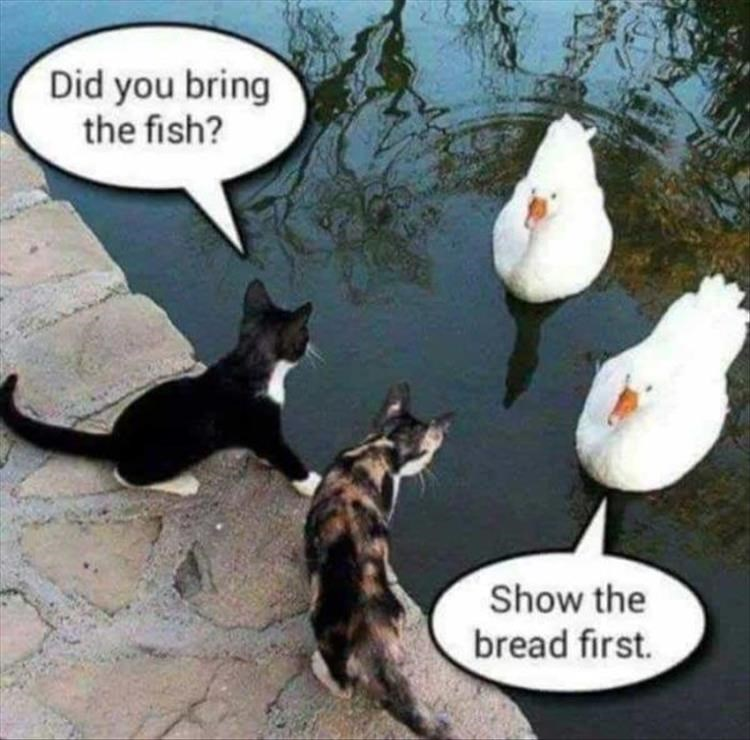 two cats exchanging goods with two ducks drug deal Did you bring the fish? Show the bread first.