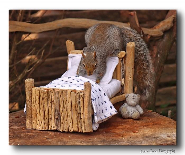 Squirrel - shoron Cutler Photography