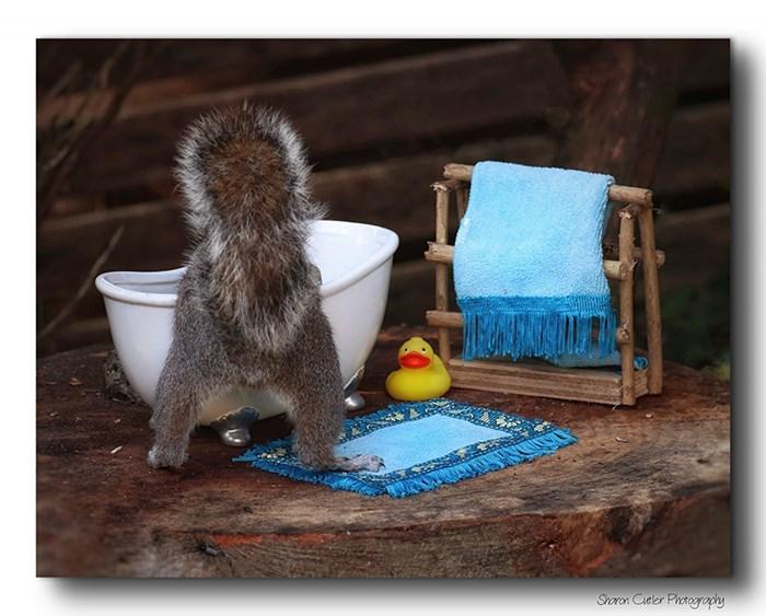 Squirrel - Shoron Cueler Phoategophy