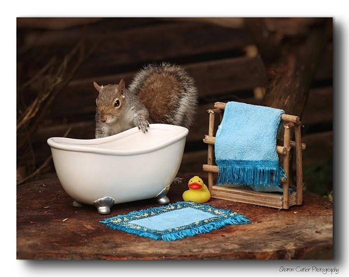 Squirrel - Shoron Cuder Photogrocy