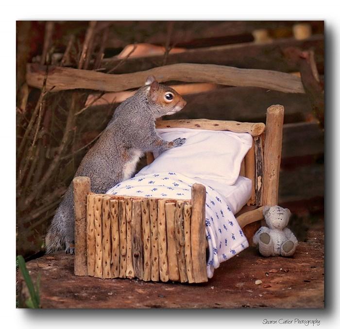 Squirrel - Shoron Citler Protography