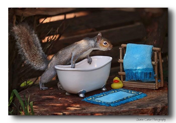 Squirrel - Sroron Cutler Photography