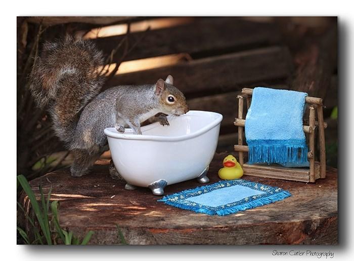 Squirrel - Shoron Cueler Protogrophy