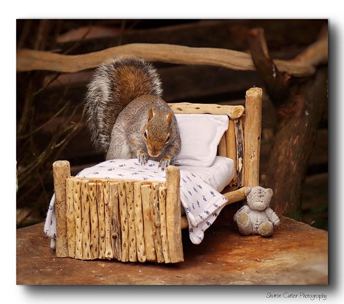 Squirrel - Shoron Cutler Photogropiy