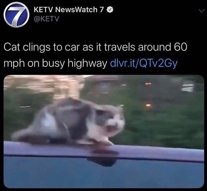 Photo caption - KETV NewsWatch 7 @KETV Cat clings to car as it travels around 60 mph on busy highway dlvr.it/QTV2GY