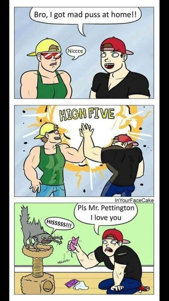 Cartoon - Bro, I got mad puss at home!! Niccce HIGH FIVE InYourFaceCake Pls Mr. Pettington I love you HISSSSS!!!