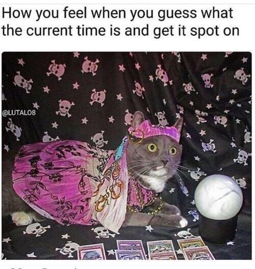 """Funny meme that reads, """"How you feel when you guess what the current time is and get it spot on"""" above a photo of a cat dressed as a fortune teller"""