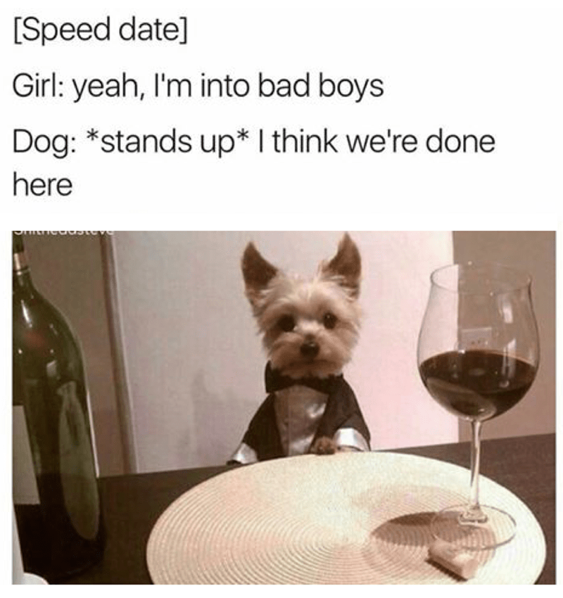 Yorkshire terrier - [Speed date] Girl: yeah, I'm into bad boys Dog: *stands up* I think we're done here
