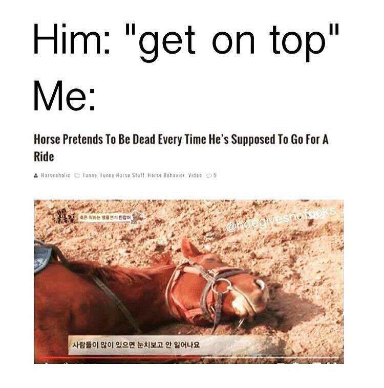 """Text - Him: """"get on top"""" Me: Horse Pretends To Be Dead Every Time He's Supposed To Go For A Ride A Harseahalie Clann, Tunny Harse Stff Harse Behaer Vides oS ks ehgedivesno 사람들이 않이 있으면 눈치보고 안 일어나요"""