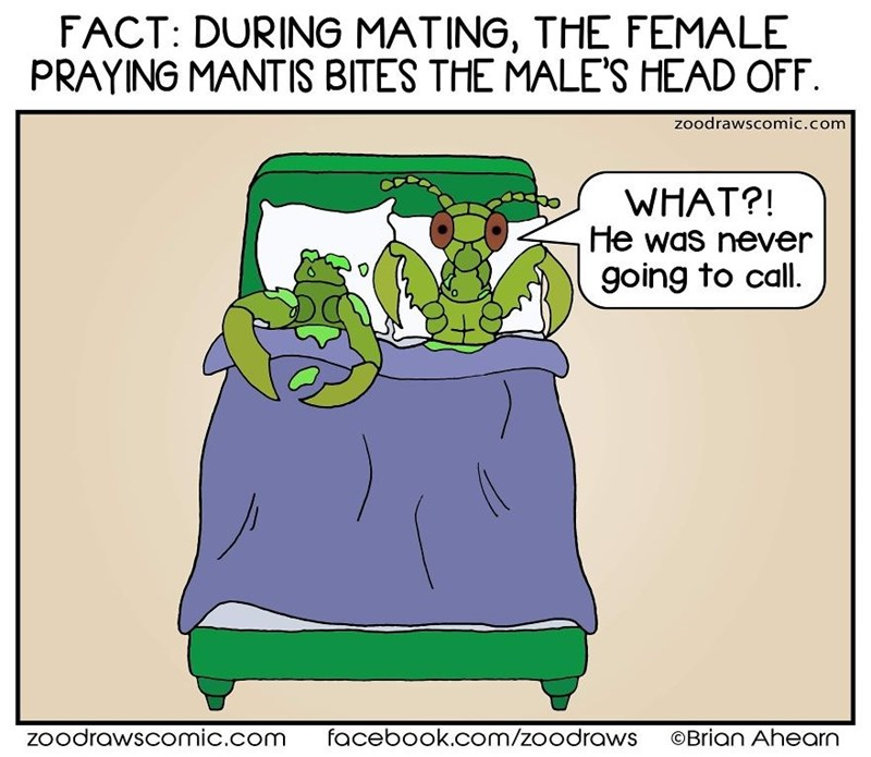 Cartoon - FACT: DURING MATING, THE FEMALE PRAYING MANTIS BITES THE MALE'S HEAD OFF. zoodrawscomic.com WHAT?! He was never going to call. zoodrawscomic.com facebook.com/zoodraws ©Brian Ahearn