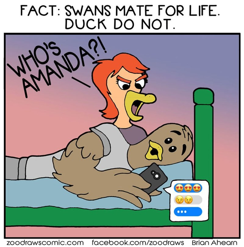 Cartoon - FACT: SWANS MATE FOR LIFE. DUCK DO NOT. WHO'S AMANDA?I zoodrawscomic.com facebook.com/zoodraws Brian Ahearn