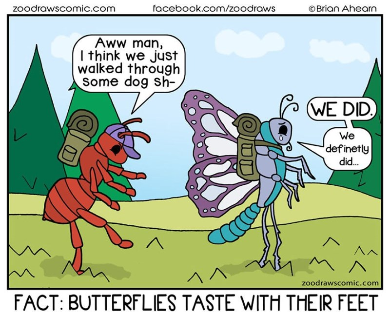 Cartoon - zoodrawscomic.com facebook.com/zoodraws ©Brian Ahearn Aww man, I think we just walked through Some dog sh- WE DID. We definetly did. ^^ FACT: BUTTERFLIES TASTE WITH THEIR FEET zoodrawscomic.com