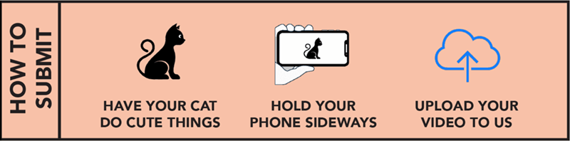 Text - HAVE YOUR CAT HOLD YOUR UPLOAD YOUR DO CUTE THINGS PHONE SIDEWAYS VIDEO TO US HOW TO SUBMIT