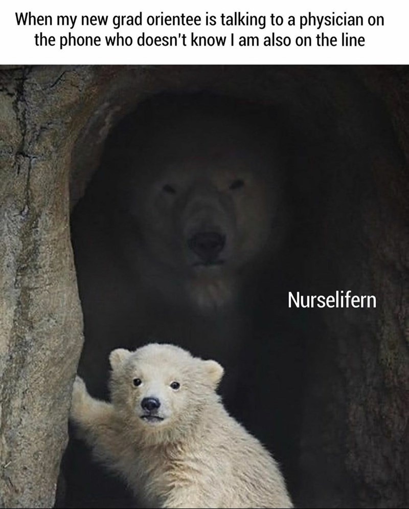 Bear - When my new grad orientee is talking to a physician on the phone who doesn't know I am also on the line Nurselifern