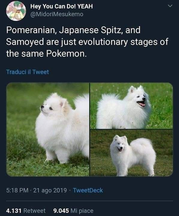 Mammal - Hey You Can Do! YEAH @MidoriMesukemo Pomeranian, Japanese Spitz, and Samoyed are just evolutionary stages of the same Pokemon. Traduci il Tweet 5:18 PM · 21 ago 2019 · TweetDeck 4.131 Retweet 9.045 Mi piace