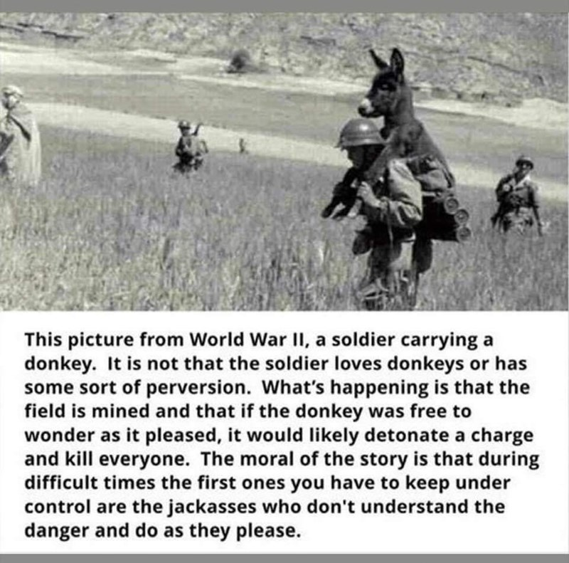 Text - This picture from World War II, a soldier carrying a donkey. It is not that the soldier loves donkeys or has some sort of perversion. What's happening is that the field is mined and that if the donkey was free to wonder as it pleased, it would likely detonate a charge and kill everyone. The moral of the story is that during difficult times the first ones you have to keep under control are the jackasses who don't understand the danger and do as they please.