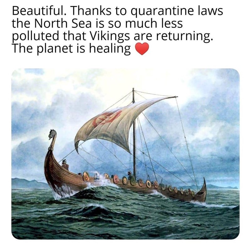 Viking ships - Beautiful. Thanks to quarantine laws the North Sea is so much less polluted that Vikings are returning. The planet is healing क