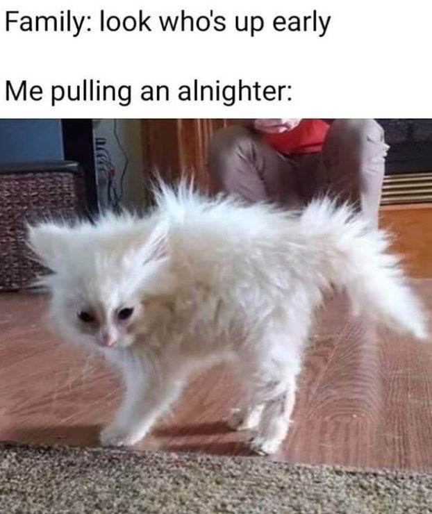 Cat - Family: look who's up early Me pulling an alnighter: